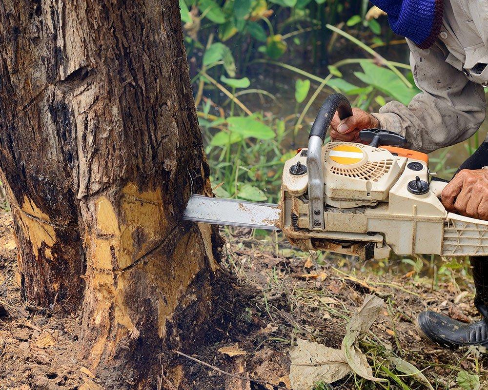 Tree Service Wichita - Tree Removal