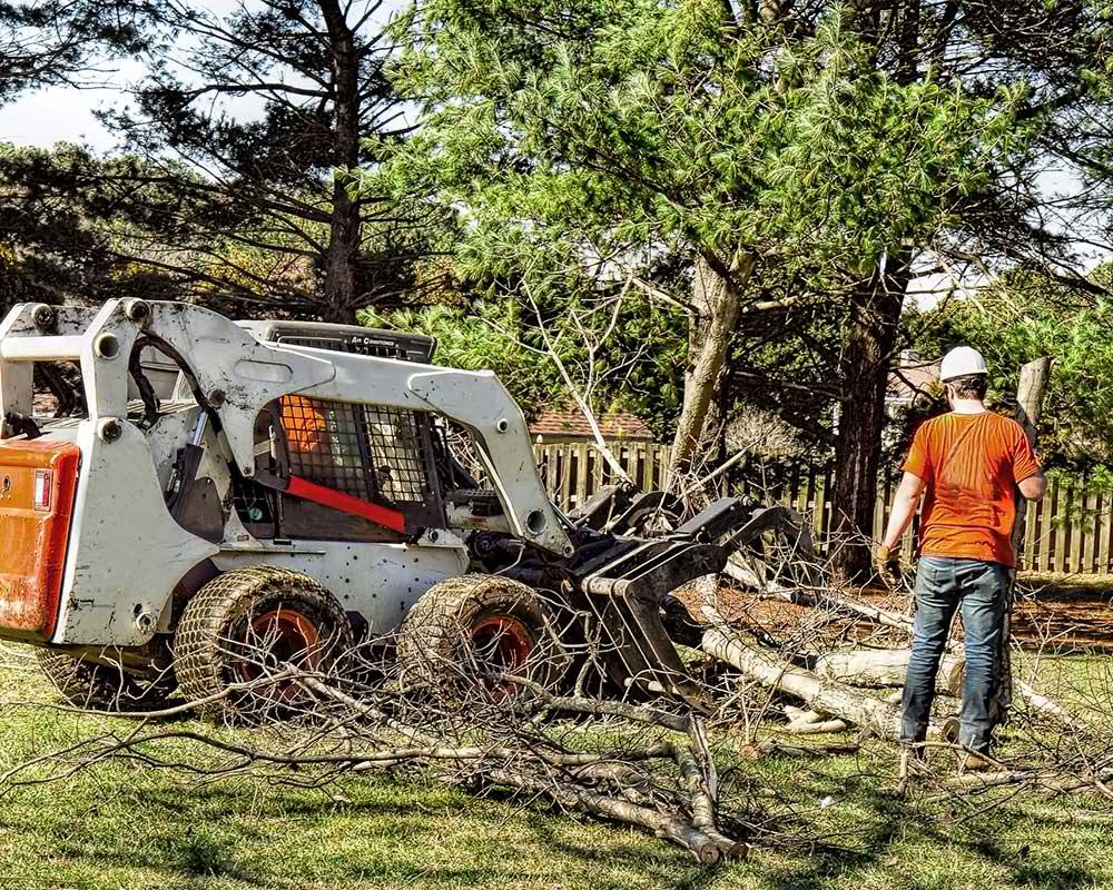 Tree Service Wichita - Arborist