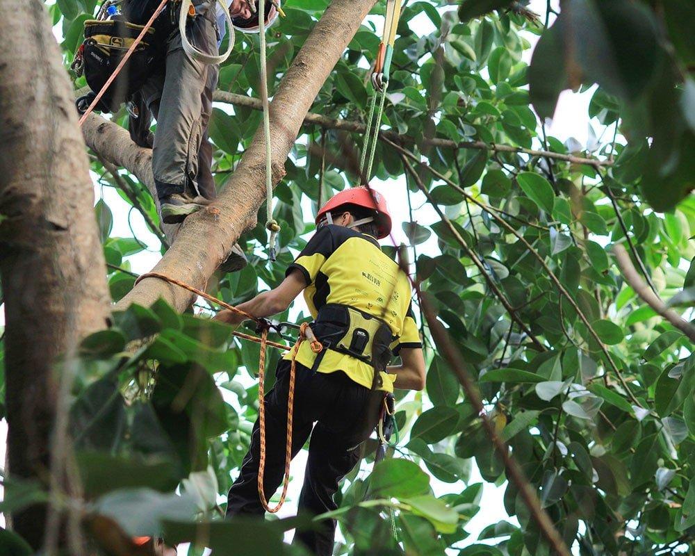 Tree Service Wichita - Emergency Tree Removal