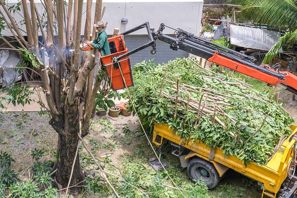 Tree Service Wichita - Tree Pruning