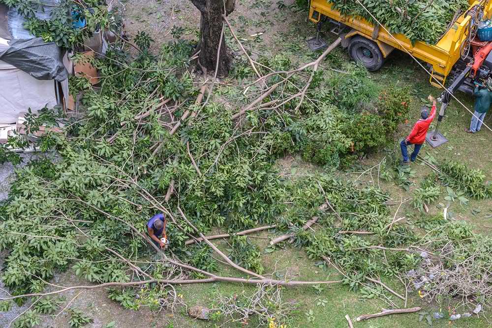 Tree Service Wichita - Tree Trimming